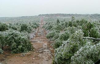 chinaforest-fram-winter-damage.jpg