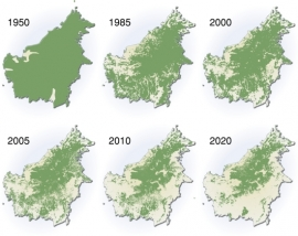 extent-of-deforestation-in-borneo-1950-2005-and-projection-towards-2020