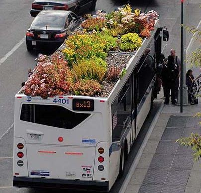 Green Bus Roof