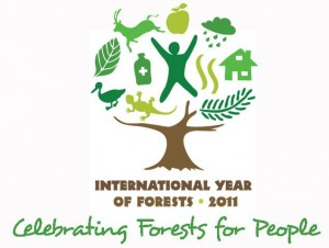 International-Year-of-Forests-2011-300x226